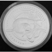 Mediterrean Monk Seal - Cyprus - pound - 2005